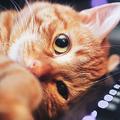実は多くの人が誤解?「猫アレルギー」の原因と緩和させる対策