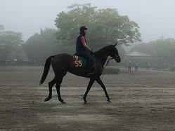 【注目新馬】リラジョリフィーユ  キズナ産駒の有力馬