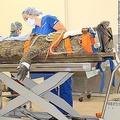 体長約3.2メートル、体重約154キロのナイルワニを手術し、飲み込んだ靴を取り出した/From University of Florida College of Veterinary Medicine/Facebook
