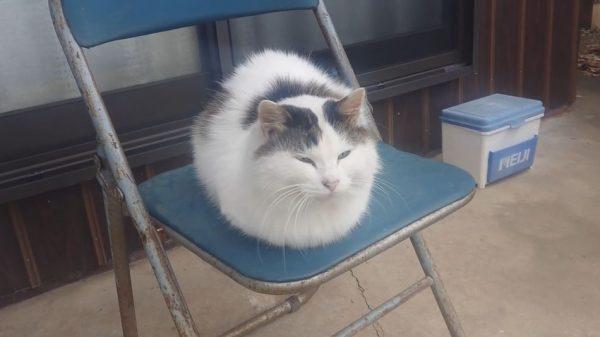 [画像] フワッフワの毛並みのご隠居ぬこ様。モフりたくなるも畏れ多いその風貌に「もう少しで猫又になりそう」「すごい貫禄だ」の声