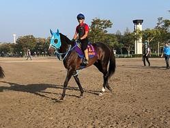 【六社S】オジュウチョウサンが久々の平地競馬に登場!