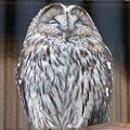 「おはようございます」上野動物園の眠そうなフクロウにツッコミも