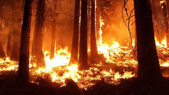 アメリカ西部の大規模火災「過激派団体が放火」と誤情報が流行 ...