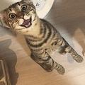 「ごはんはよ!!!」鬼気迫る表情でご飯を訴える猫の写真が話題