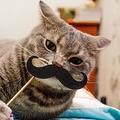 猫は人間の行動をまねることができる ハンガリーの学者が発表