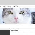 画像は「ツンギレ猫の日常」スクリーンショット