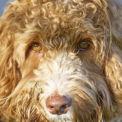 犬 犬種 キムタク