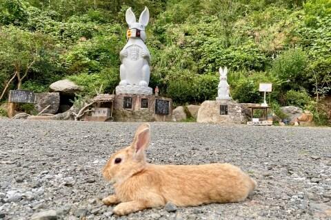 [画像] 「ウサギ観音像」の寺で飼育崩壊、「草取り」で放し飼い 救出ボランティアが実態語る