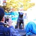 中国で近年、人気が高まっている日本犬。なかでも秋田犬は中国の一部富裕層の間でも人気となったが、忠実さと愛くるしさで世界中に愛好家が多くいる犬種だ。映画化されたことなどで世界的な知名度を持つ忠犬ハチ公も秋田犬だが、東京・渋谷にあるハチ公像は写真スポットとして海外から訪れる旅行客にひそかな人気となっている。中国メディアの今日頭条は1日、「ハチ公像はなぜ旅行客に人気となっているのか」とする記事を掲載した。(イメージ写真提供:123RF)