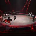 動物を使った演目を練習するロシアのサーカス団(2020年9月19日撮影、資料写真)。(c)Natalia KOLESNIKOVA / AFP