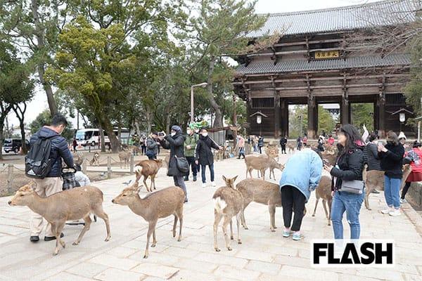 公園 奈良