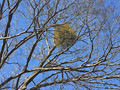 木の上にあるモコモコの塊 鳥の巣ではなく実は「謎の生物」だった