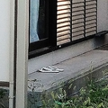 容疑者の自宅アパートのベランダには、長男のものと思われる緑色の子供用の靴が置かれていた