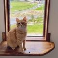 """眺めのいい窓や周辺環境、キャットタワー…etc.猫にとって最高の環境を考えた、""""猫のための家""""とは?"""