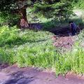 少年が乗った車が炎上した現場。左側にある木にぶつかったという=2020年5月23日午前7時35分、富山県小矢部市嘉例谷、平川仁撮影
