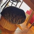カップケーキや発酵しすぎたパンなど、食べ物に例えられた猫さん(提供:ココニャ@猫写真集、発売中!さん)
