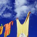 洗濯物から香る「お日様の匂い」ダニの死骸ではない?