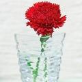 介護職の「母の日に花を贈るのはできれば控えて」ツイートに共感集まる