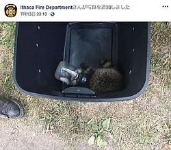 マヨネーズ瓶に頭を突っ込んでしまったアライグマ(画像は『Ithaca Fire Department 2018年7月13日付Facebook』のスクリーンショット)