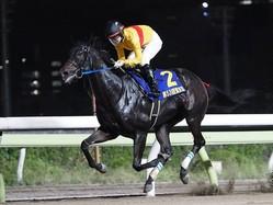【東京スプリント】JRA出走予定馬