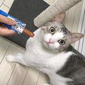 いつもと違うおやつに「これじゃない」毅然とした表情で訴える猫