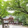 厄よけで有名な深大寺。涼やかな空気と豊かな自然に癒されよう