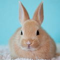 野ウサギが掘り起こした石「9000年前に人類が使用していた石器」と判明