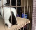 まるで謝っているかのように眠っている猫がTwitterで話題。