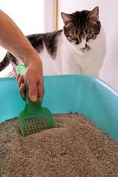 猫砂はどう選ぶ?(Ph:Getty Images)