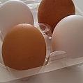「卵は赤玉の方がいい」は本当?