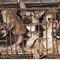 中国農村部の飲食店で豚肉の代わりに犬肉が提供される(画像は『TODAYonline 2019年10月22日付「China's pork shortage puts dog and rabbit meat back on the menu in rural communities」(World Dog Alliance)』のスクリーンショット)