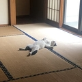 大雨で気の毒に思い家の中に入れた猫 盛大にくつろぐ姿が話題