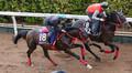 菱田騎手を背に坂路にて併せ馬で追い切るワールドリバイバル(左)(撮影・亀井 直樹)