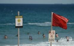 サメ出没を注意する看板。オーストラリア・ニューサウスウェールズ州ニューカッスルにて(2015年1月17日撮影、資料写真)。(c)PETER PARKS / AFP