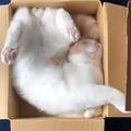 ダンボールでぐっすりの猫動画に「アクロバティック寝」驚きの声