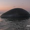 インドネシア・ 東ヌサトゥンガラ州のクパン沿岸で発見された、膨れ上がったクジラの死骸(2020年7月21日撮影)。(c)DAVID WILSON / AFP