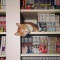 行方不明の飼い猫 飼い主が探し回ったところ本棚の隙間で発見される