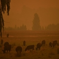 森林火災でオレンジ色に染まった空。豪ニューサウスウェールズ州で(2020年1月10日撮影、資料写真)。(c)PETER PARKS / AFP
