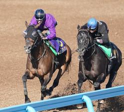 併せで追い切るC・ルメール騎乗のグランアレグリア(左)(撮影・西川祐介)