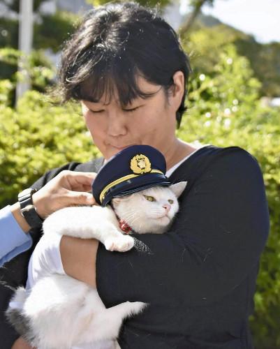 「猫のお巡りさん」任…