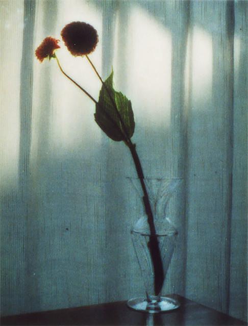 イベント・スクール・公募展 : 審査員は奥山由之、テーマは「Flower」|オンライン写真コンテスト IMA next #15