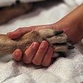 ノルウェー全土で原因不明の病気のために犬が死んだという症例報告が相次いでいる/John Moore/Getty Images North America/Getty Images