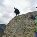 コロンビアのプラセ国立公園でアンデスコンドルの個体数調査に協力する先住民の男性とアンデスコンドル(2021年2月13日撮影)。(c)Luis ROBAYO / AFP