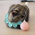 猫のひとり遊びには「電動猫じゃらし」 反応を検証