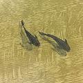 魚が泳いでる...(画像はこなてんさんが2020年2月26日投稿)