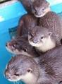 「ウソにウソにウソにウソを重ねる」桂浜水族館の爆笑写真がSNSで拡散中