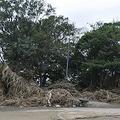 大量の泥やごみがそのままになっている兵庫島公園 =16日、世田谷区玉川(吉沢智美撮影)