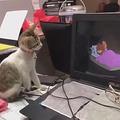 トムとジェリーを子猫2匹に見せてみたら01