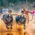 インド・カルナタカ州マンガルールから約30キロ離れた村で開かれた伝統の水牛レース「カンバラ」に臨む、スリニバス・ゴウダさん(2020年1月31日撮影)。(c)Rathan Barady / AFP