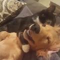 猫の超絶テクニックに昇天する犬04
